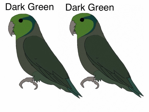 Dark Green (D) x Dark Green (D) Pairing a dark factor green to a dark factor green means that each parent has the chance of giving its offspring a single factor gene and also the chance of doubling up on the dark factor to produce double dark factor offspring. Offspring will be 25% green, 50% dark green and 25% olive