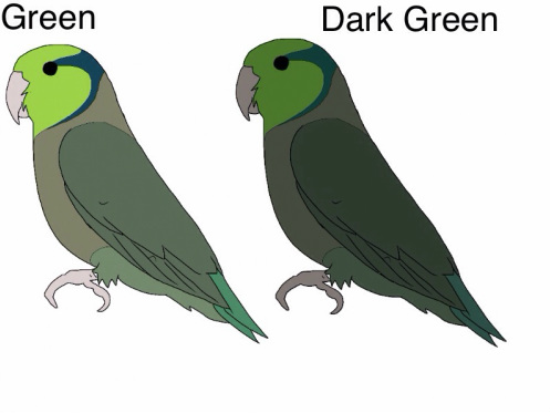 Green (no dark factor) x Dark Green (D) This pairing means that only the dark green parent will pass on a Single Dark factor gene to its young. So basically 50% will be green (wild colour) and due to half the parents putting in the dark gene 50% dark greens.